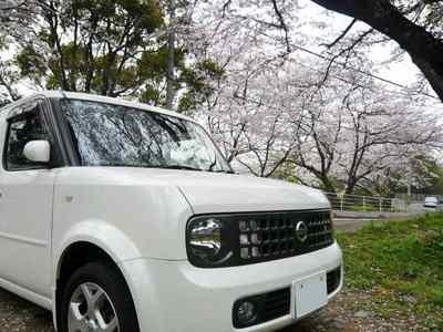 桜と日産キューブ