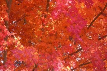 九州の平野部でも紅葉が