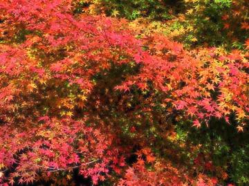 小石原の紅葉