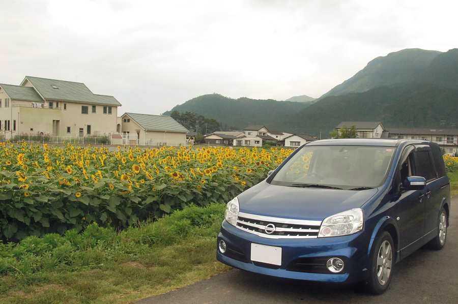 LaFesta(車のある生活)/熊本阿蘇・ひまわり畑