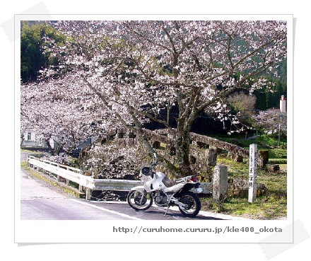 美里町で、KLE400と、さくらと、石橋「大窪橋」