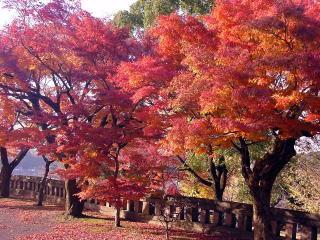 大分・竹田市内の紅葉