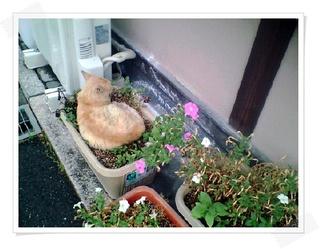 福岡県秋月にある、旨いパン屋さんでの出来事。