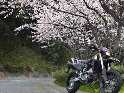 桜とDRZ-400SM