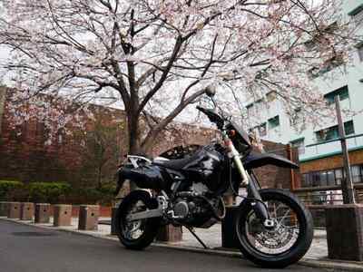 桜と陸橋とバイク