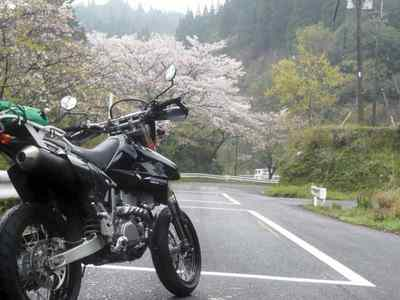 桜咲くツーリング