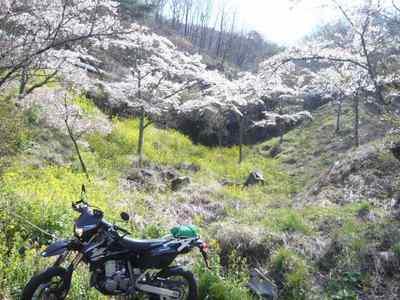 高森の千本桜