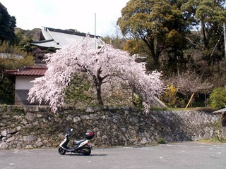 桜とアドレスV125G