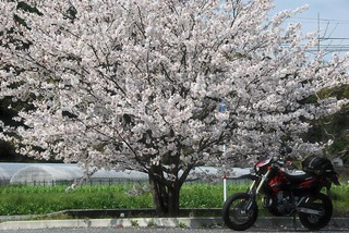 熊本県の美里町総合体育館の駐車場にて、