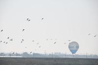 佐賀バルーンフェスタ/熱気球と空へと羽ばたく鳥