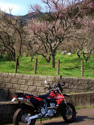 三岳梅林公園