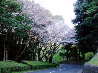 北九州美術館に繋がる道。