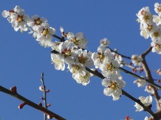 梅の咲く頃に。 原付二種De花見ツーリング