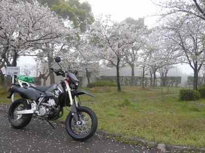 高速・九州道 広川SAで見つけた桜