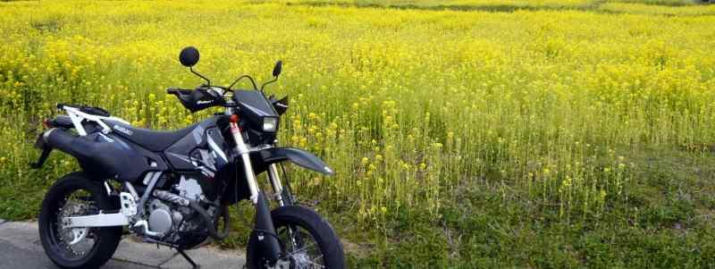 菜の花とDR-Z400SM